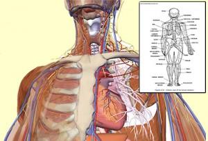 anatomy_physiology