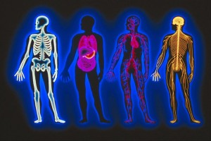 anatomy-&-physiology