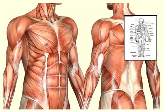 anatomy&physiology